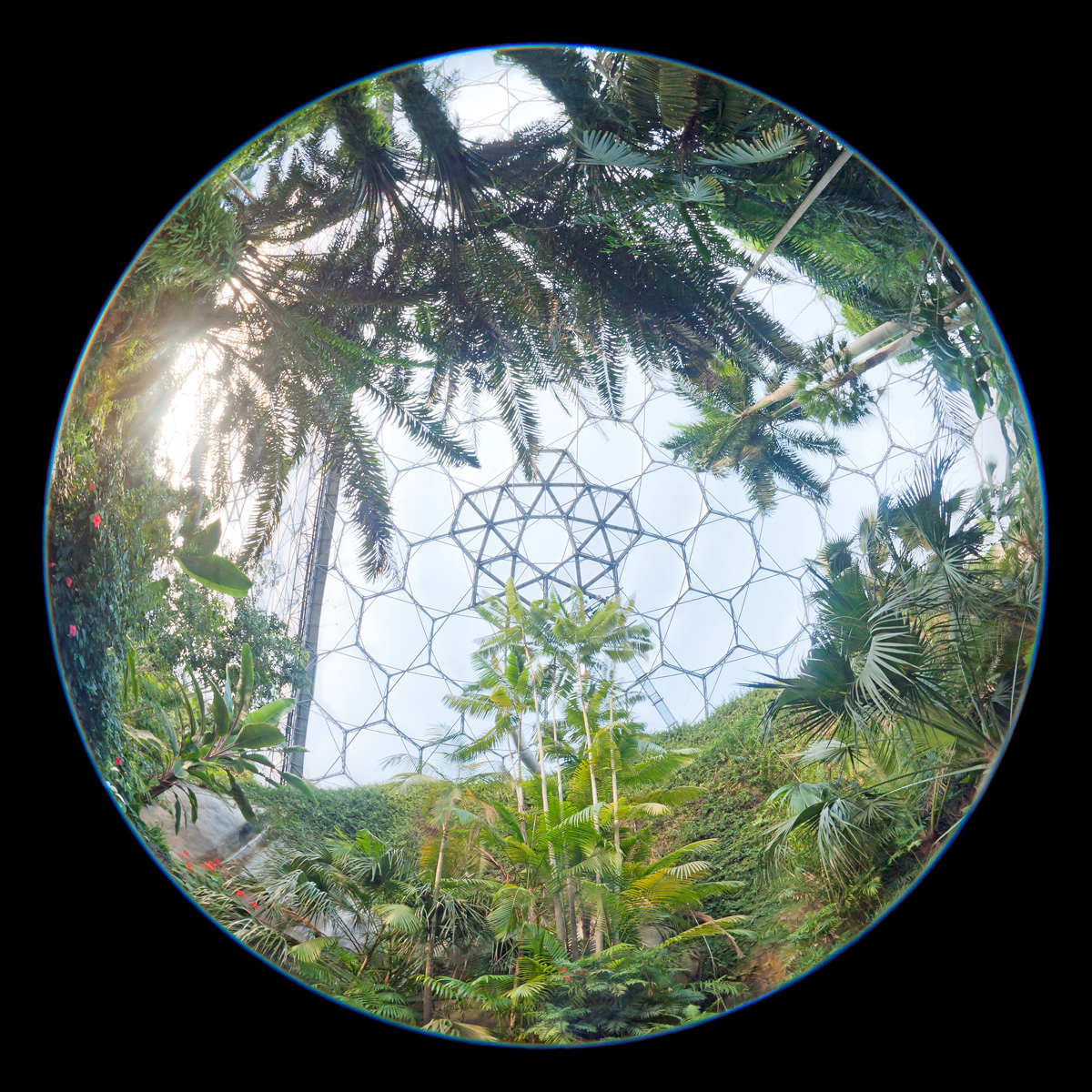 Eden Project, Cornwall 2015
